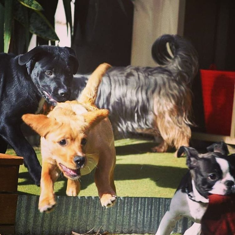 puppy daycare perth