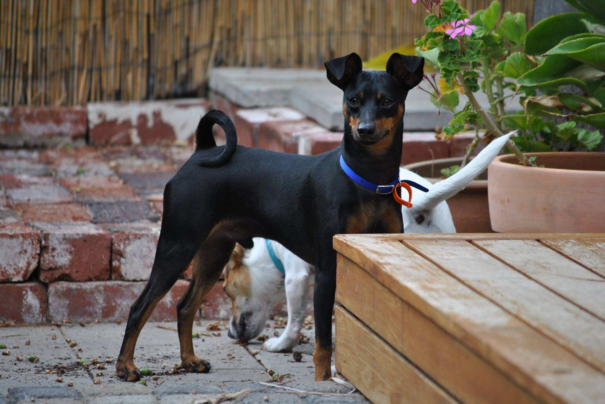 temporary dog care
